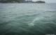 Thailanda Khanom delfini roz 12