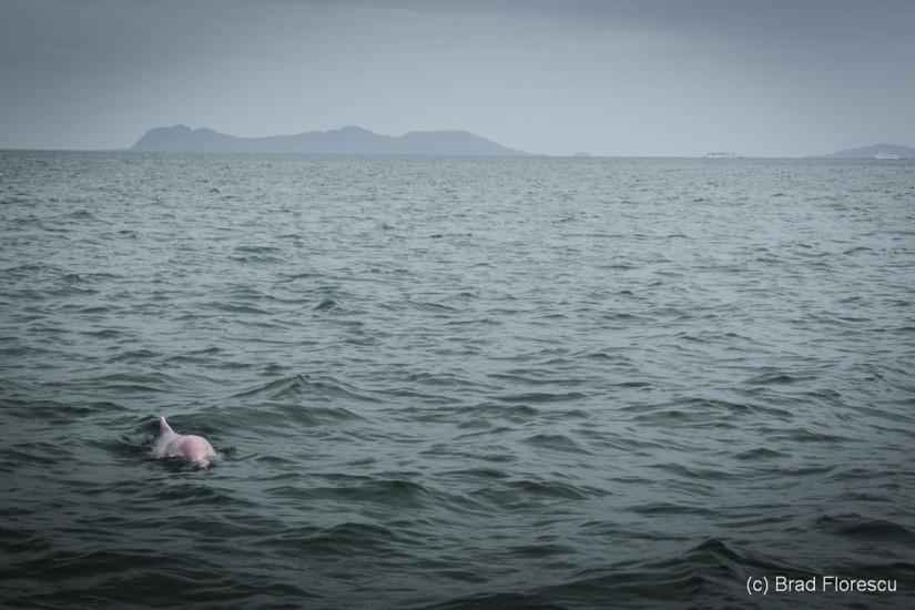 Thailanda Khanom delfini roz 11