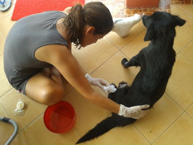 O cățelușă bolnavă de o formă gravă de meliodioză, s-a aciuat la casa noastră din Khanom. Am botezat-o Violeta, am îngrijit-o și acum e bine.