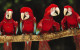 Papagal Macaw rosu