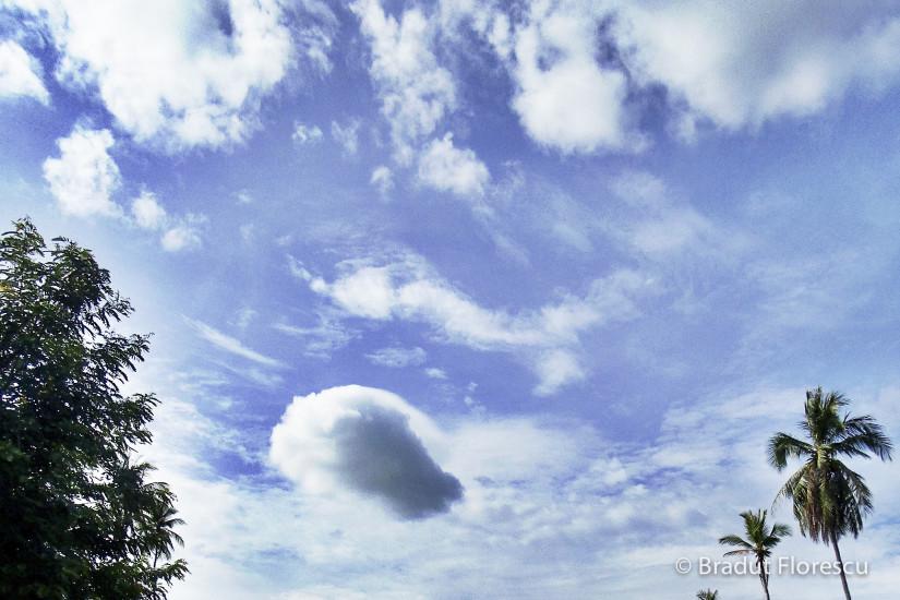 Cer palmieri Thailanda