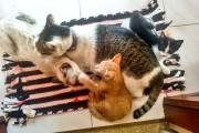Pisici Felicitaro