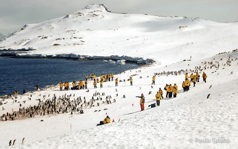 antarctica12-debarcare-pe-uscat-2