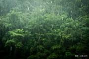Ploaie Thailanda