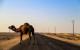 Iran desert camila.